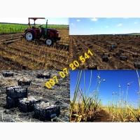 Продам посадковий матеріал (насіння ) часнику сорту Любаша 2018