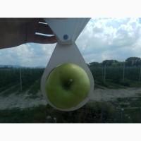 Яблоко опт