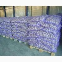 Продам картоплю товарну на експорт