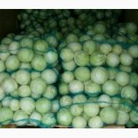 Продам от фермера капусту Агрессор по по оптовым минимальным ценам, урожай 2018 года