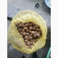 Продам бойный грецкий орех урожая 2018 года