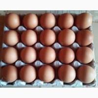 Продам яйца куриные С-1, С-2 свежие диетические