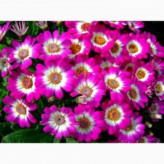 Квіти оптом до 8 березня