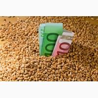 Куплю зерновые, масличные от 20т