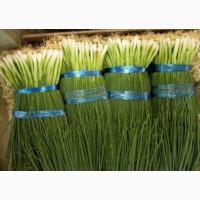 Продам зелёный лук