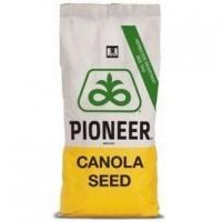 Семена Рапса Пионер ПХ113 (PX113)