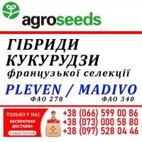Семена кукурузы (Франц.селекция) - Pleven (фао 270) / Madivo (фао 340) - Agroseeds