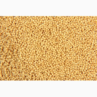 Продам зерно амаранту
