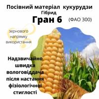 ГРАН 6 - насіння гібрида кукурудзи з ФАО 300