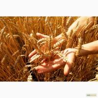 На постоянной основе закупаем Пшеницу 2-6 класс, Ячмень, Подсолнечник и нишевые культуры