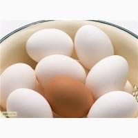 Продам фермерское и домашнее яйцо