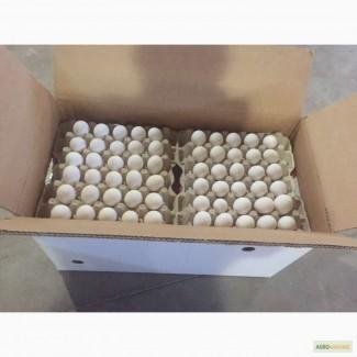 Заявка на яйцо ст белое 5 контейнеров в неделю
