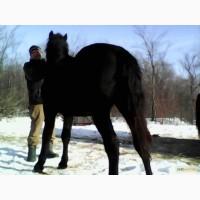 Продам коня(лошиця)
