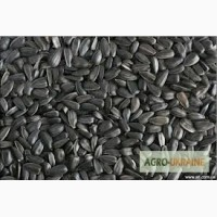 Куплю подсолнечник масличный ДСТУ 7011-2009