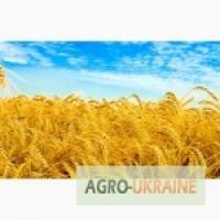 Покупаем пшеницу урожая 2017