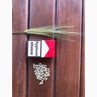 Продам ячмень канадский с документами Харлем, Дункан, Талбот (двуручка урожай 2018 года