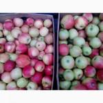 Продам яблоки разных сортов опт и розница