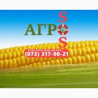 Семена кукурузы Любава 279 (Фао 270)