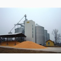 Куплю кукурузу самовывоз або доставка