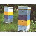 Куплю бджоли з корусними вуликами