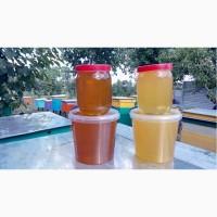 Продам мед з фацелії