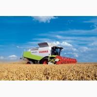 Послуги по обмолоту зернових, соняшника та кукурудзи