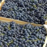 Куплю виноград Молдова