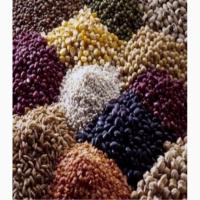 Куплю зерно для экспорта