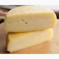 Продам сыр на промпереработку обезжиренный