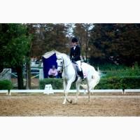 Продам лошадь для спорта дети юноши