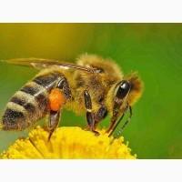 Продам бджолосім#039;ї Вінницька обл