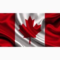 Семена Канадской пшеницы купить, насіння пшениці озимої