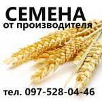 Семена озимой пшеницы. Скидки. Цена производителя / без перекупов :)) Agroseeds