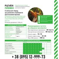 Гибрид кукурузы Плевен (ФАО 270), Оригинатор Майсадур, урожай 2019
