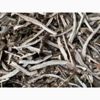 Продам корень Аира, Калган, брусничник лист