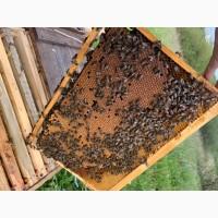 Бджоли, бджолопакети, бджолосімї, українська степова