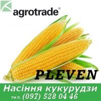 Насіння 2020 року. Гібрид Pleven ФАО 270 - Кукурудза Maisadour Semences