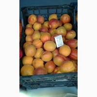 Продам крупный абрикос