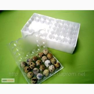 Упаковки для перепелиных яиц своими руками