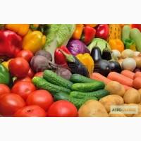Куплю картофель, морковь, лук, капусту, буряк, овощи