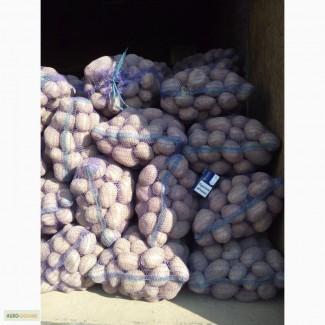 Продам Картофель от Населения