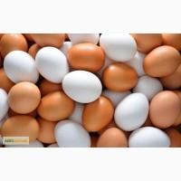 Торгова компанія шукає постачальника яєць в Україні