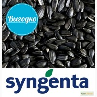 Семена подсолнуха Syngenta NEOMA 2016 года урожая(АКЦИЯ)