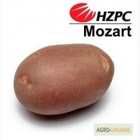 Семена картофеля Моцарт