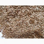 Продам посевной материал льна масличного