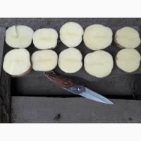 Продам отличный товарный картофель, Ривьера, Беллароза