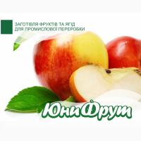 Куплю яблоки оптом по всей Украине