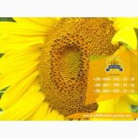 Семена подсолнечника / Сертифіковане насіння соняшника