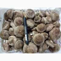 Предлагаем грибы Шиитаке от 80грн/кг