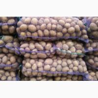 Продам товарну картоплю, сорт Слов`янка